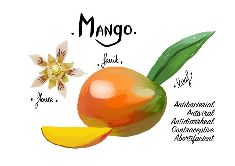 illustration mangue